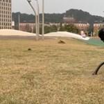 Mesterséges intelligenciával fejlesztik a robotkutyát – videó