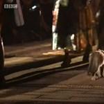 Egy macska lett a marrákesi divatbemutató sztárja
