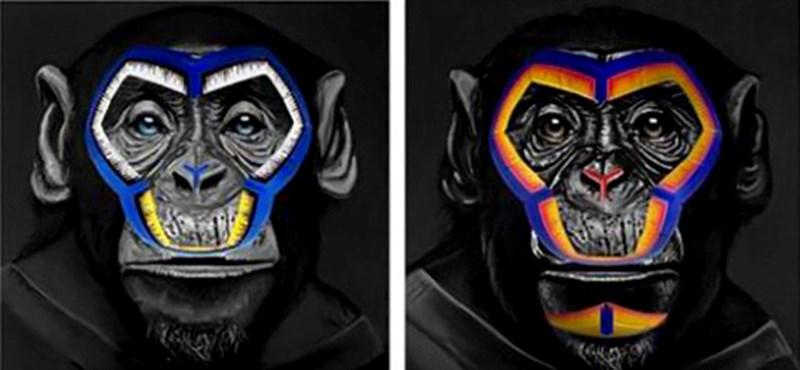 Három majom lett a Serie A antirasszista kampányának arca
