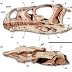 Nagyon furcsa dinoszaurusz maradványait tárták fel Brazíliában