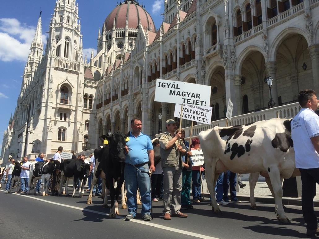 e_! - 16.05.23. - Tehenek, tüntetés, tejtermelők, tehén, tej