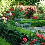 Illatozó rózsakert az erkélyen