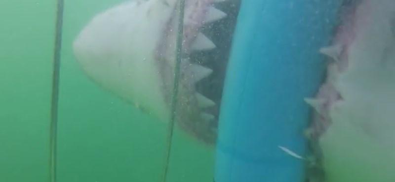 A cápa szájából mentette ki barátját egy férfi
