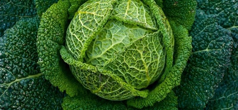 Könnyített magán a miskolci férfi a zöldségeknél, 160 kilónyi lett eladhatatlan