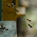 Méhek elpusztítása miatt ítéltek börtönre és többmilliós büntetésre egy osztrák gazdát