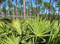 5+1 érdekesség a növényről, ami férfiaknak és nőknek is gyógyír