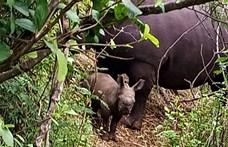 A koronavírus-járvány jótéteménye: az orrszarvúkra vadászók megijedtek tőle