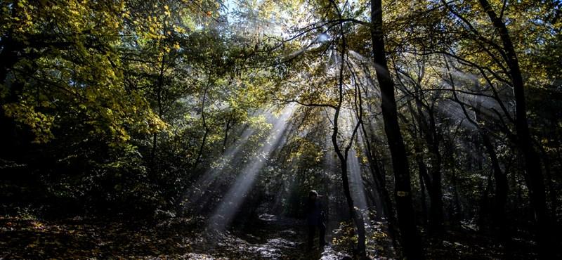 Szépen tönkretenné az erdőket a kormány egy új törvényjavaslattal