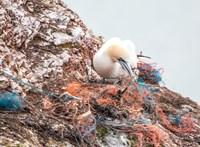 Már a vadon élő állatok ürülékében is ott vannak a (nagyon kicsi) műanyagdarabok