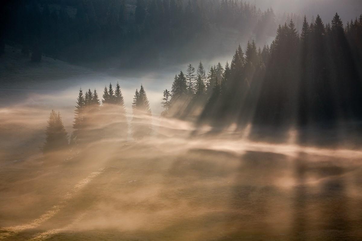 Fantasztikus képek az év hazai természetfotósaitól - Nagyítás-fotógaléria