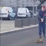 Megint kacsacsaládon segítettek a rendőrök – videó