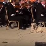 Csak a macskáktól fél! - magyar zenész mesélte el, hogy került kutya a színpadra
