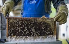 Szennyezett mézzel öntötték le a berlini minisztériumot