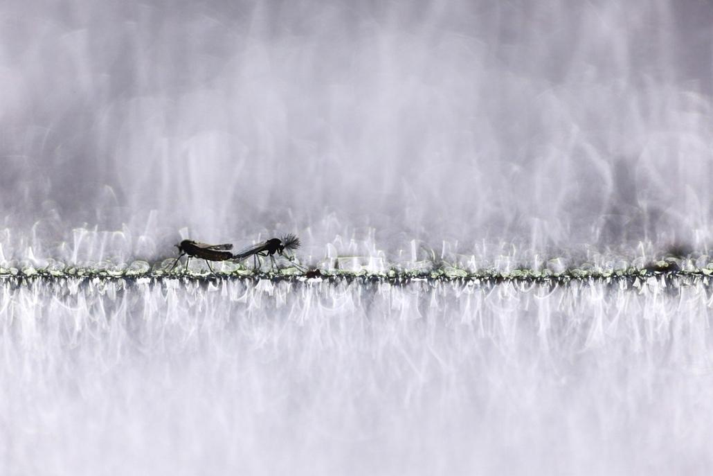 NE HASZNÁLD! - canon év természetfotósa, természetfotó, IV. Az állatok viselkedése, 1. díj - Csillogó szerelem
