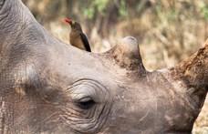 Felgyorsult a kihalás: 20 éven belül annyi állat tűnhet el a Földről, mint a XX. században összesen