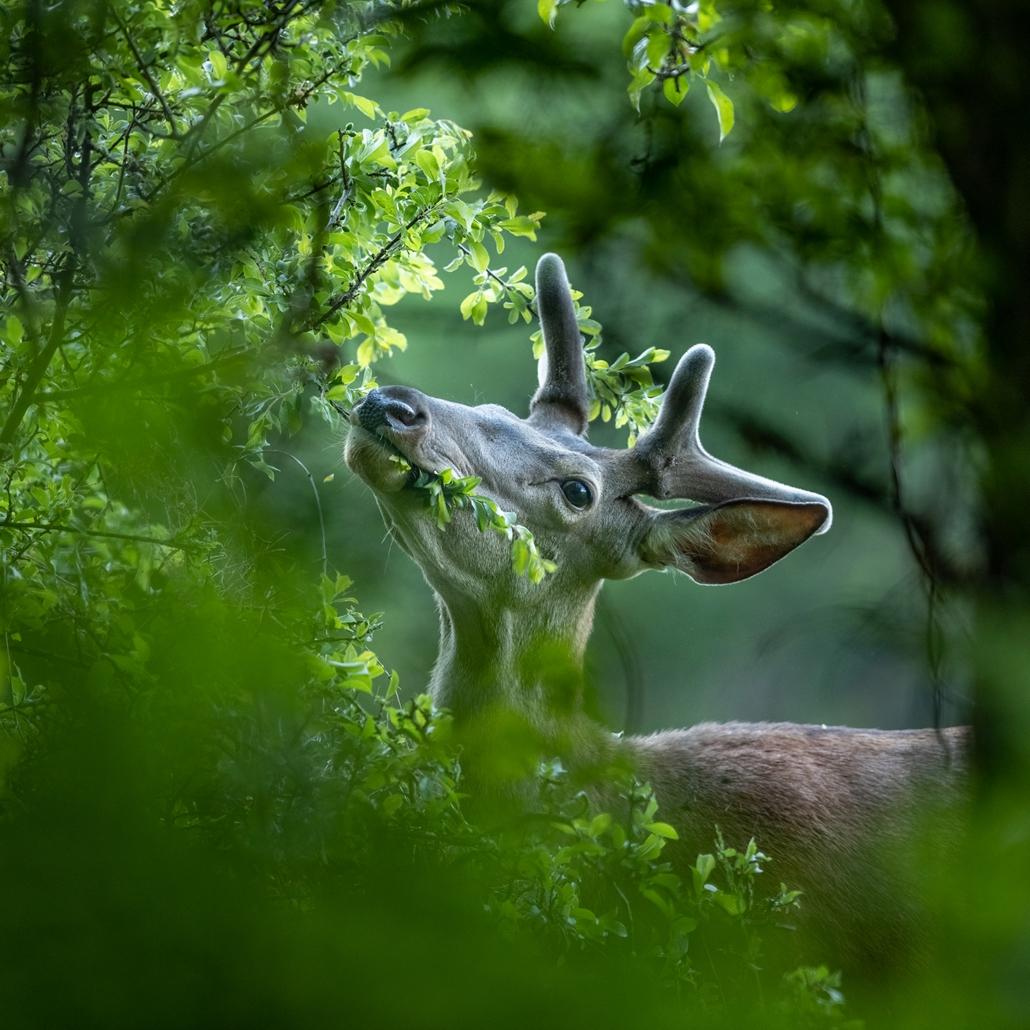 NE HASZNÁLD Varázslatos Magyarország természetfotó kiállítás Falat - Bükki Nemzeti Park ~ Bóta István