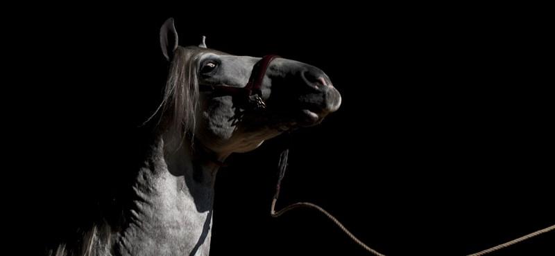 Ellopott egy lovat, de ez még csak a kezdet