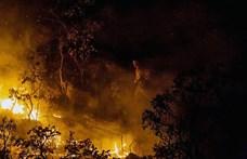 Idén sokkal több tűz ütött ki az amazóniai esőerdőkben, mint tavaly