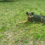 Kutya költözött a campusra Szolnokon