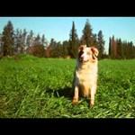 Videó: imádják a kutyatévét az unatkozó ebek