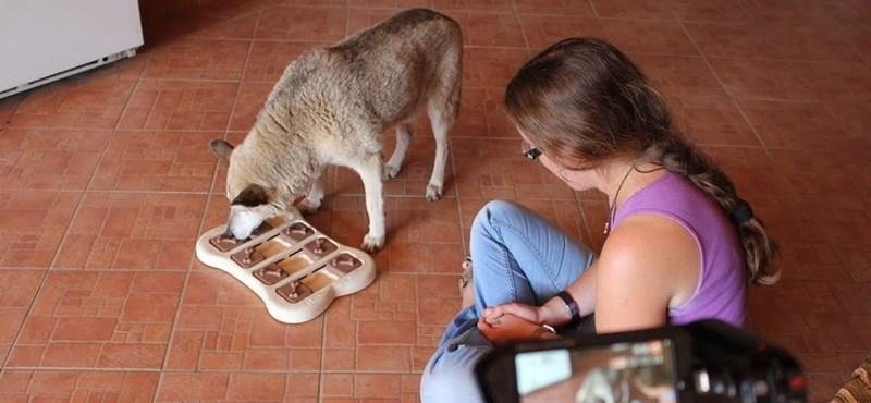 Azért vizsgálják annyira a tudósok a kutyákat, mert sokat megtudhatunk így az emberekről