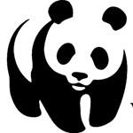 Az erdők drámai pusztulására figyelmeztet a WWF