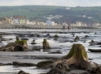 4500 éves erdő fái bukkantak fel a tengerből Wales partjainál