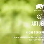 Milliárdos végrendelet: az állatkertigazgató azt hitte, vicc