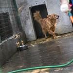 Évente egy Túró Rudi árát költhetik a vidéki menhelyek egy kutyára