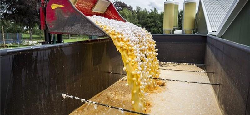 Tönkremennének a kistermelők, de nemcsak ezért tiltakoznak az óriási tojásfarm ellen Vas megyében