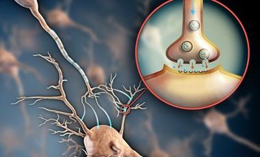 Emésztőrendszer, orvosi szén, gombák: ilyen témákat kaptak a biológiából érettségizők