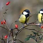 Ami a cinkéknek jó, az a vízi madarakra veszélyes – itt a téli etetési útmutató