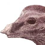 Fészkén és tojásain ülő dinoszaurusz maradványaira bukkantak Kínában