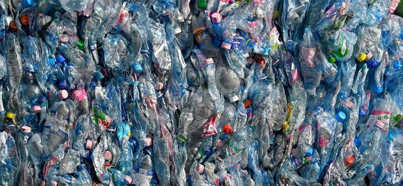 Nyolcvan zsáknyi műanyaghulladékot gyűjtöttek össze a Szentendrei-szigeten