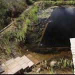 Házilag készített, természetes úszómedence (videó)