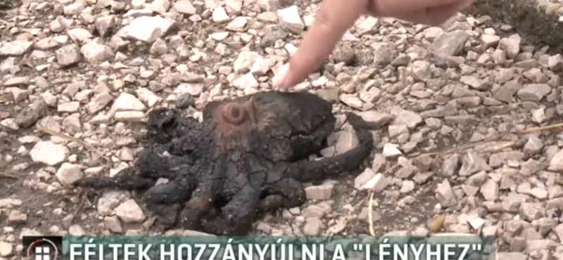 Polipszerű izé keltett riadalmat egy Győr melletti faluban