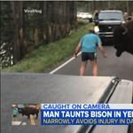 Kiszállt autójából és egy bölényt inzultált az elborult amerikai férfi - videó