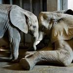 Két hét múlva már elefántokat is láthat Szegeden