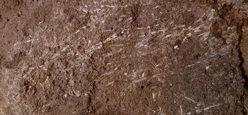 Előkerült egy 200 000 éves ágy