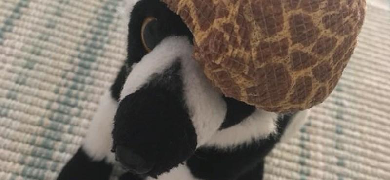 A világ legbarátságosabb állatkertje levette a lábáról a magyar kislányt