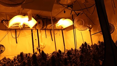 Egy 3 emeleti lakásban találtak komoly marihuána-ültetvényt a rendőrök az Etele úton