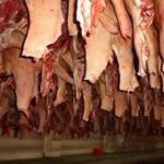 A sertéspestis miatt olcsóbb lesz a sertéshús? A felvásárlási ára biztosan csökken