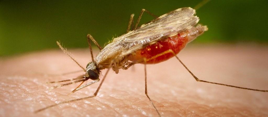 A szúnyoginvázió és a madármalária kutatása megmutatja, hogy mivel jár a klímaváltozás - Qubit