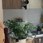 A kisfiának kevert profin tápszert, tízmillióan imádják a magyar mixert