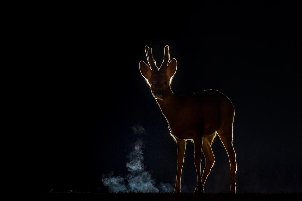 NE HASZNÁLD Varázslatos Magyarország természetfotó kiállítás Bambi - Kiskunsági Nemzeti Park ~ Szabó Géza Attila