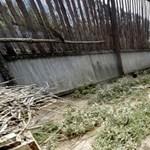 Bárki beléphet a Hortobágyon lábadozó vadmadarak röpdéibe