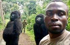 Profikat megszégyenítően szelfiztek a gorillák a vadőrökkel