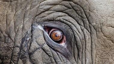 Az önkormányzat sem tud semmit az elpusztult szadai elefántokról, a kormányhivatalhoz fordulnak
