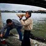 Lepukkant a Petőfi híd - Nagyítás-fotógaléria
