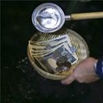 Japánban vallásos tisztelet övezi a pénzmosást